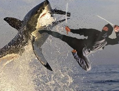 Roundtable Discussion: Shark Week… ish