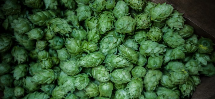Wet Hop Dream – Fresh Hopped Red IPA
