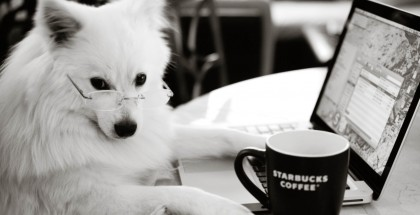 hipster puppies featured img