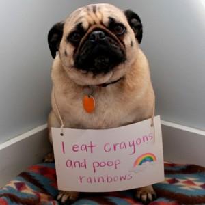rainbowpoopdog