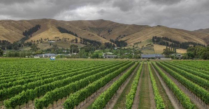 Lawson's Dry Hills Vineyard (Photo courtesy of lawsonsdryhills.co.nz)