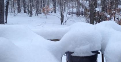 Surviving Snow