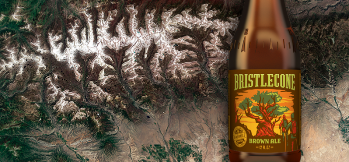 Uinta Brewing | Bristlecone Brown Ale