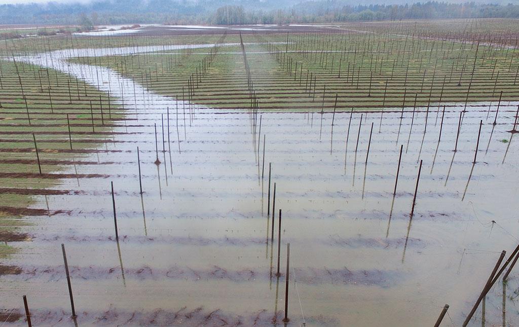 Rogue Farms Flooding