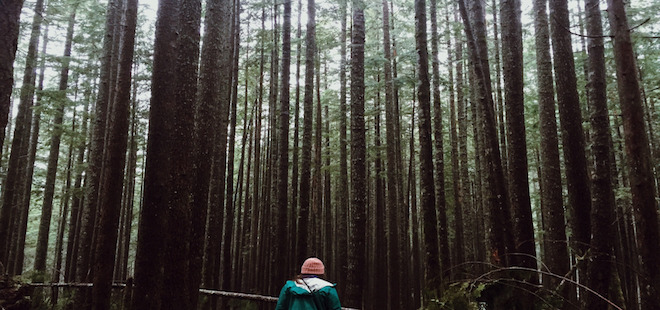 PorchDrinking Playlist | Lost in The Woods Playlist