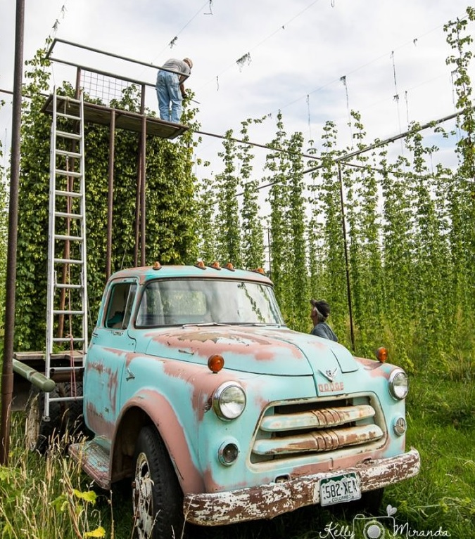 Monzón Showcase: Local Fall Harvest at Pine River Hops in Bayfield, CO.