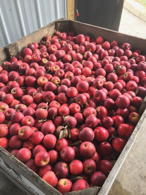 Apples come in large pallets to Virtue from a variety of Michigan farmers.