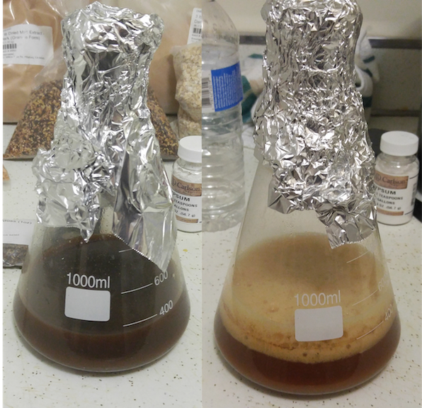 Yeast Starter Before / After (Photo by Scott Johnson)