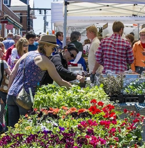 Delirium caf - Leesburg flower and garden festival 2017 ...