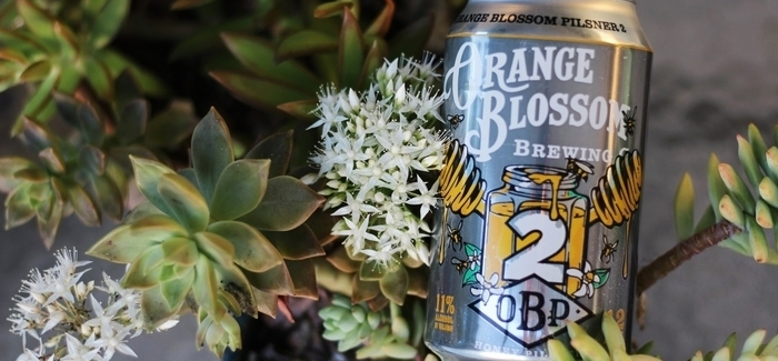 Orange Blossom Brewing | Orange Blossom Pilsner 2