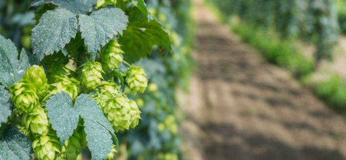 Ask the Experts: Spring Beers They're Excited About
