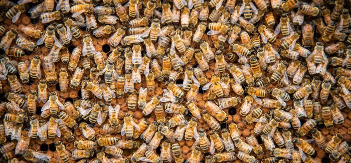 Bee to Bottle | All Abuzz About Honey Beers